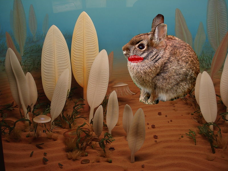 Precambrian rabbit rawr 1