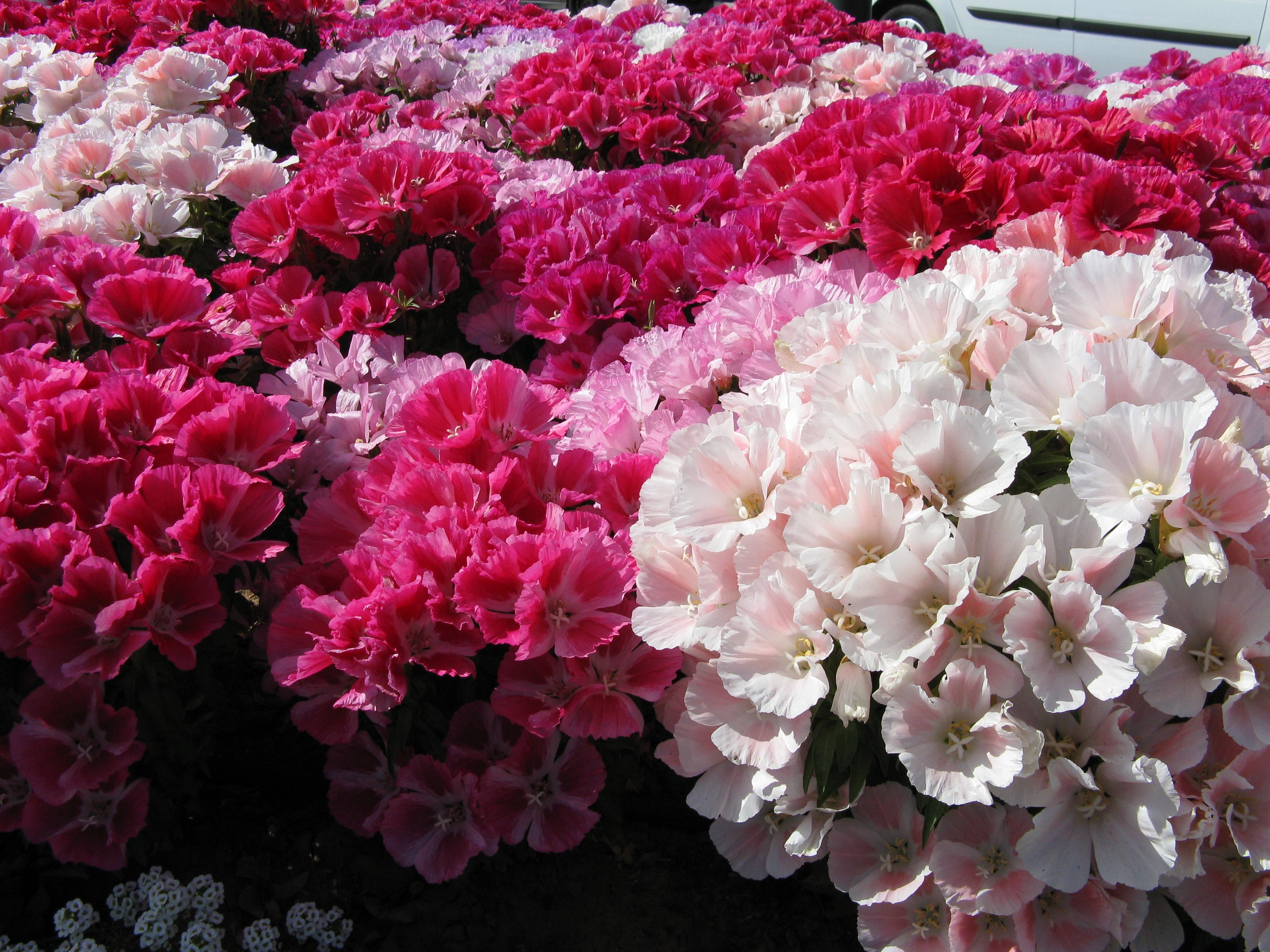 Фото цветов с названиями для улицы