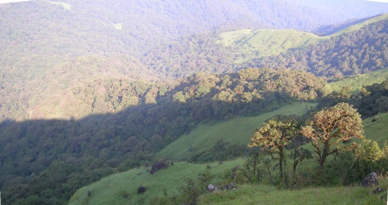 படிமம்:Talakaveri valley shola.jpg