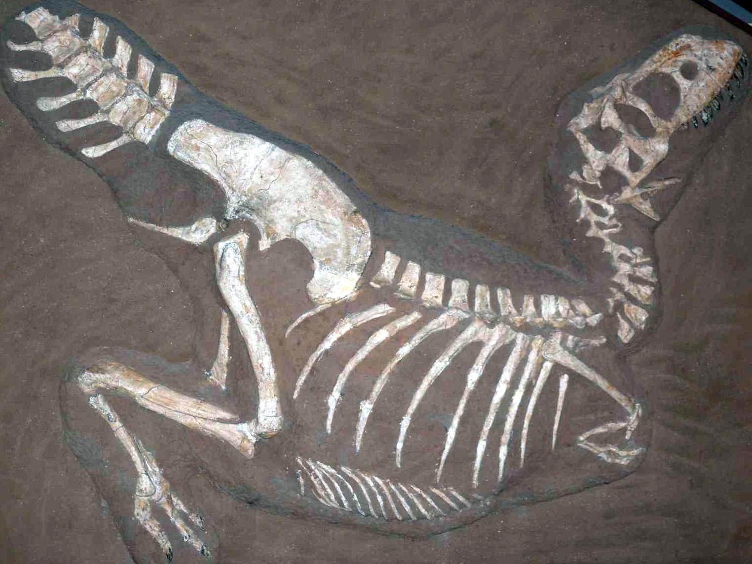 TarbosaurusP1050352.jpg