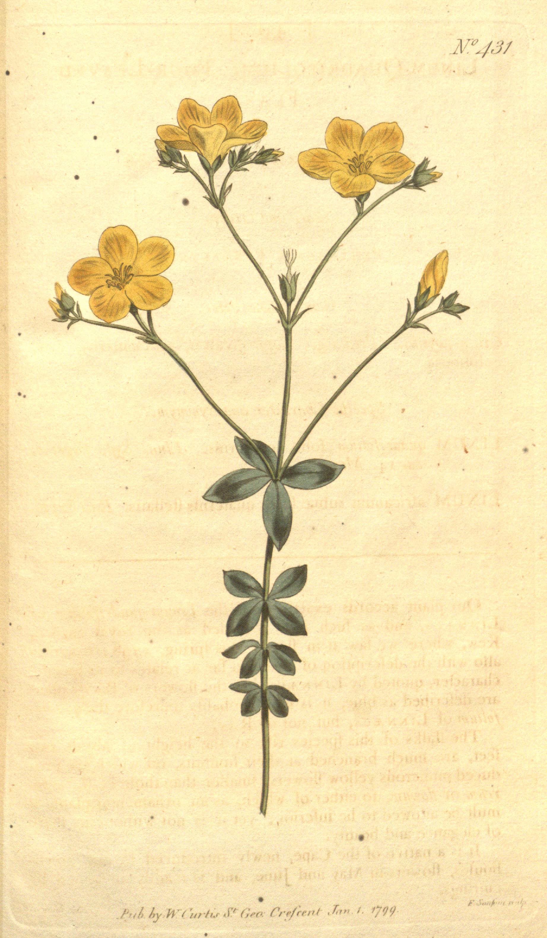The Botanical Magazine, Volume 12