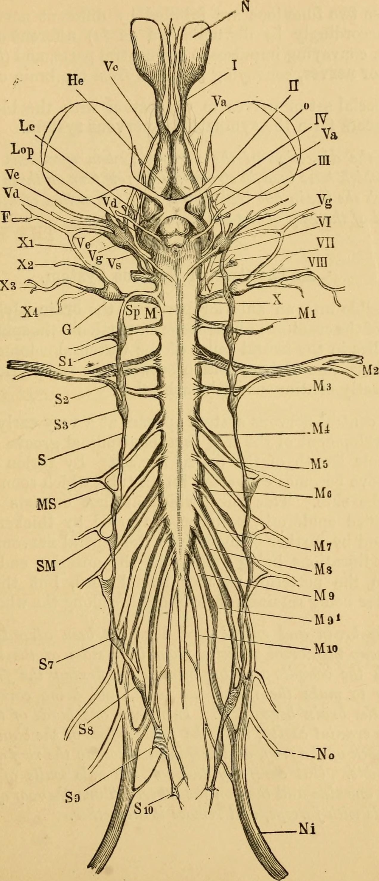 File:The frog - an introduction to anatomy and histology (1885 ...