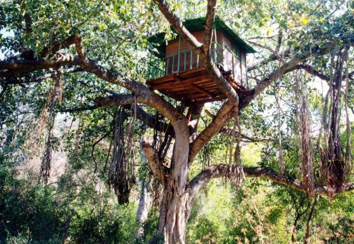 Treehousemarayoor