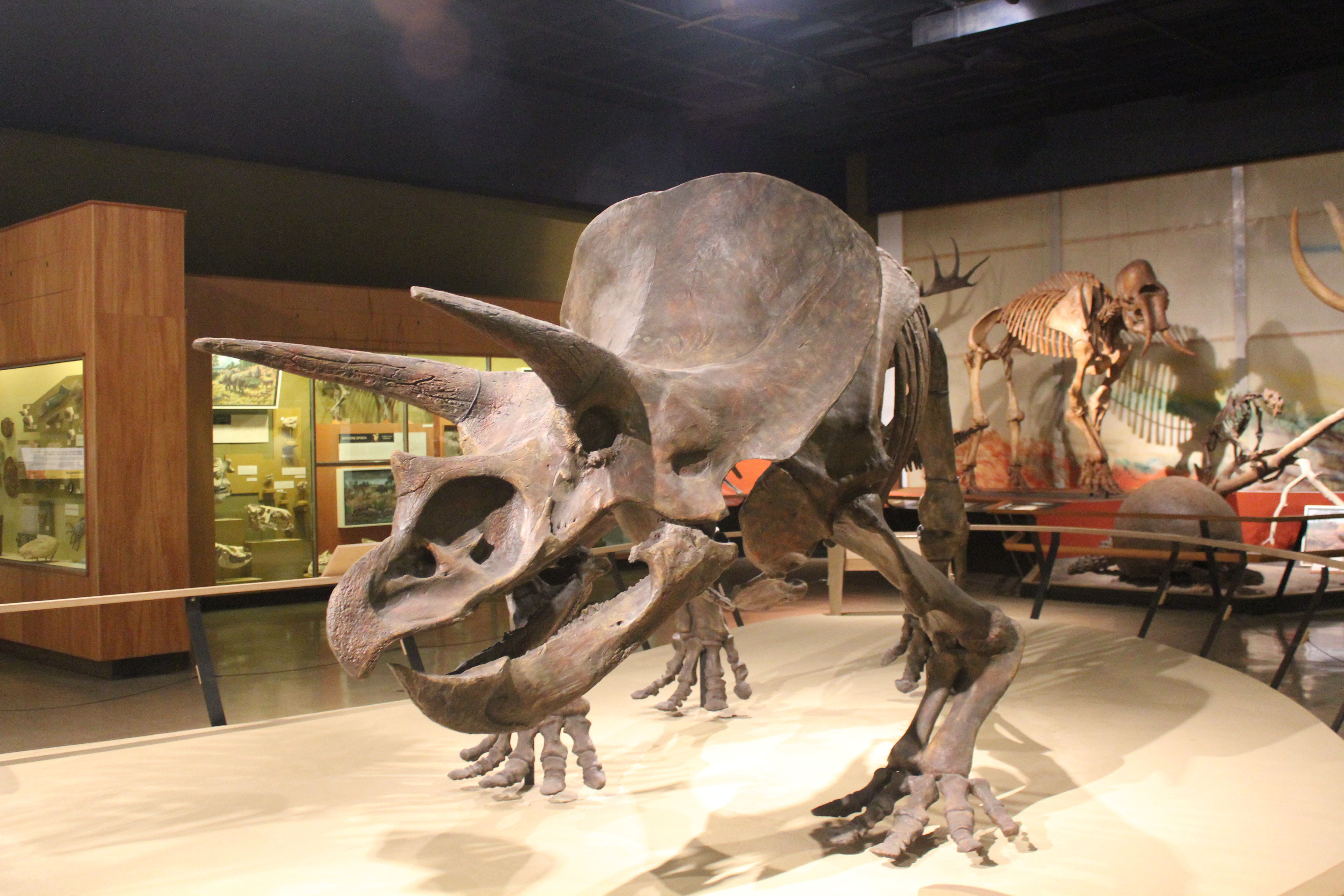 Cleveland Museum Of Natural History