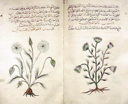 Arabic_herbal_medicine_guidebook.jpeg