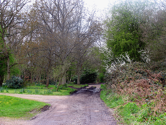 Bucklebury Common Nature Reserve - geograph.org.uk - 4849