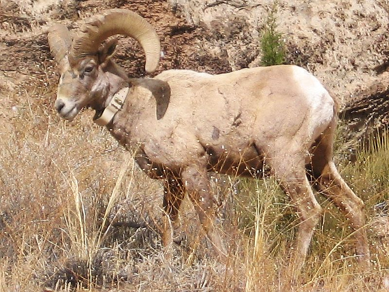 bighorn dating Bighorn national forest: the bighorn scenic byway (route 14) is spectacular - see 384 traveler reviews, 240 candid photos, and great deals for sheridan, wy, at tripadvisor.