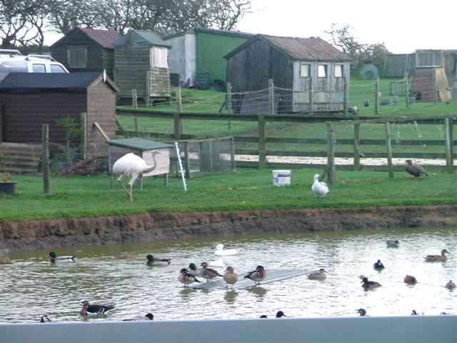File duck pond with rhea moor house farm for Design of farm pond ppt