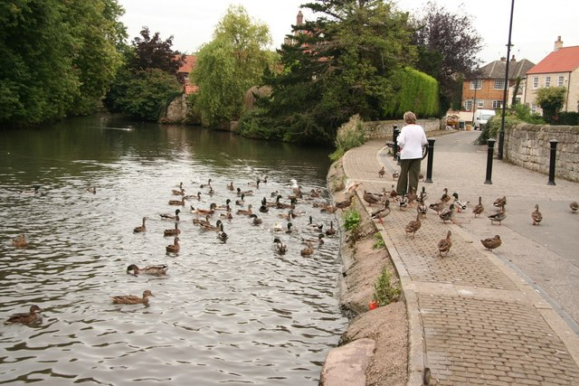Duck feeding - geograph.org.uk - 1030406