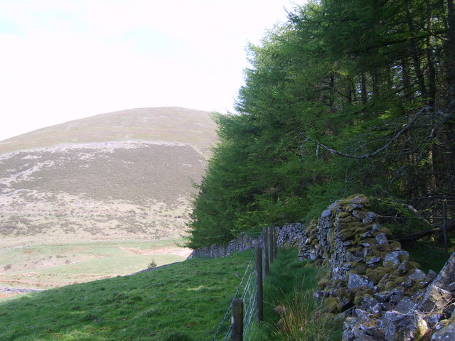 Forest Edge - geograph.org.uk - 1275644