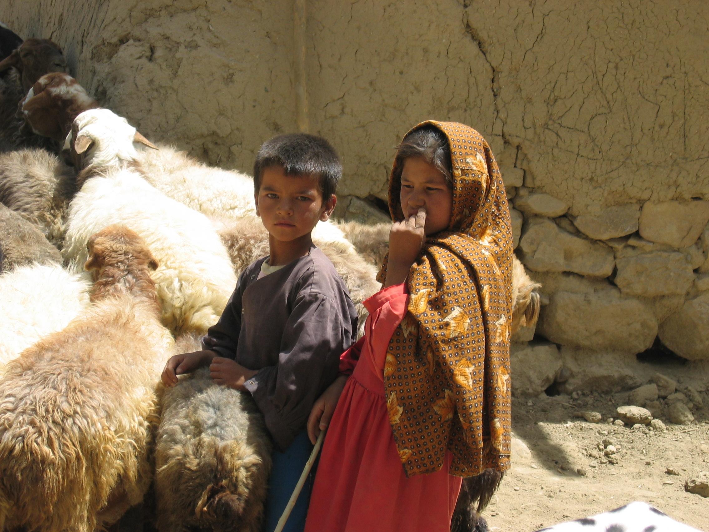 File:Goat farming Afghanistan jpg - Wikimedia Commons