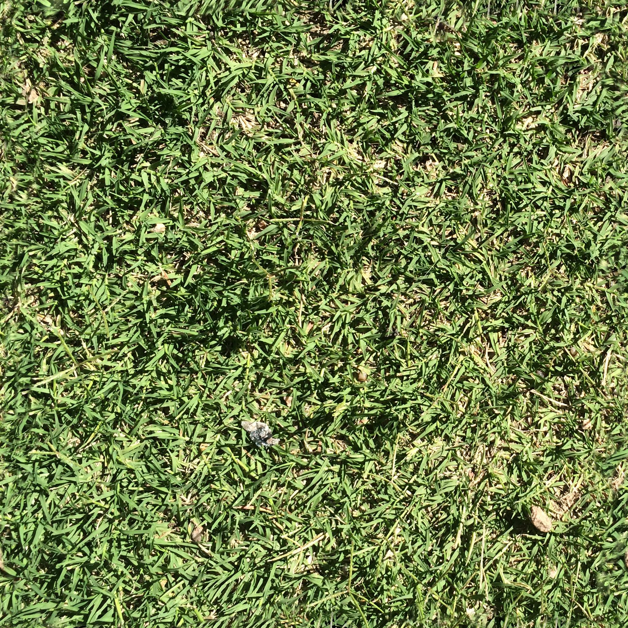 Grass Texture Png Free Transparent Grass Texture Seamless