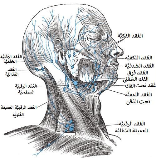 جريدة الرياض تورم الرقبة ردة فعل دفاعية ضد التعديات الجرثومية المهاجمة للجسم