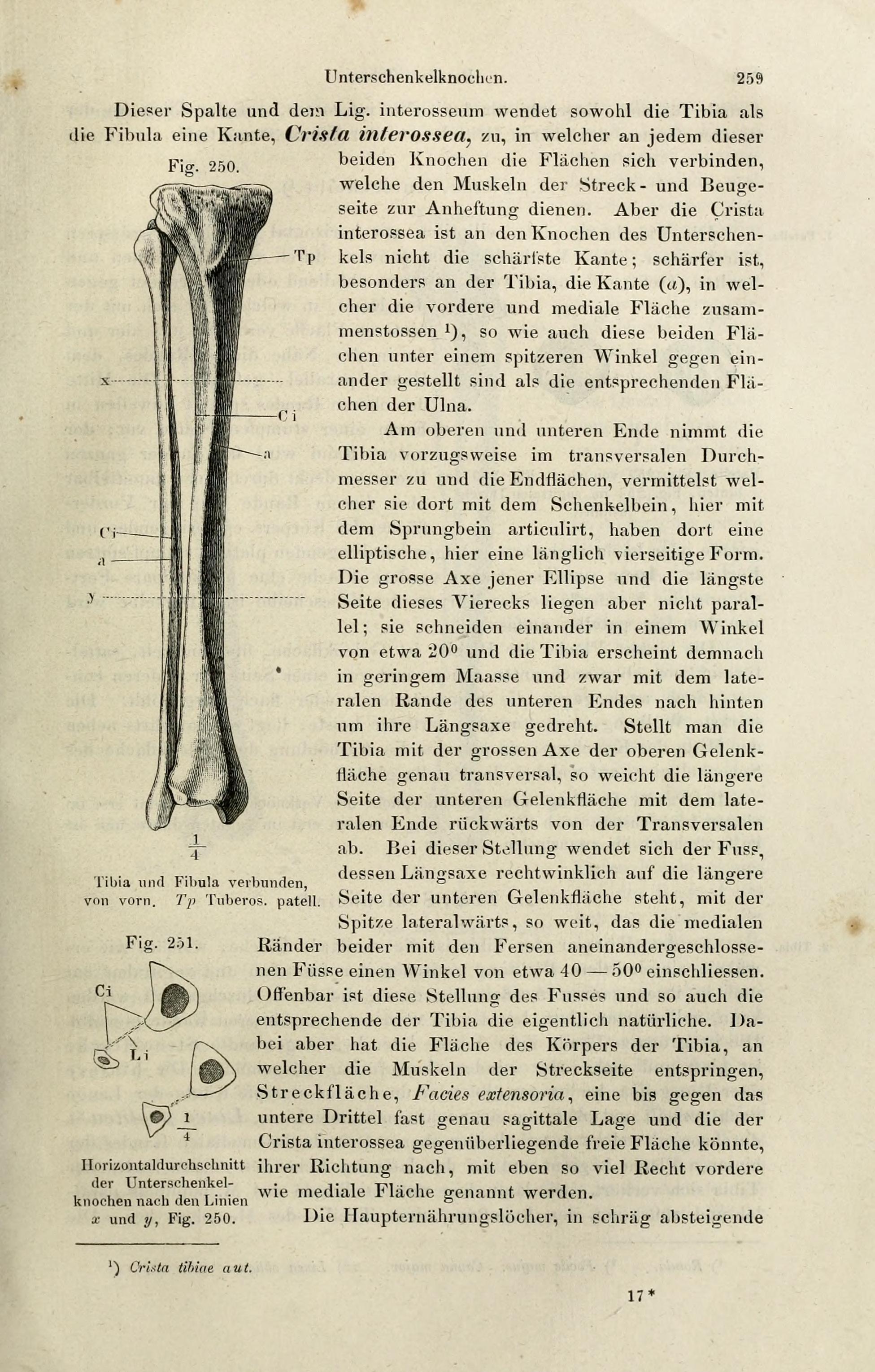 Energiekorper Menschen Handbuch Feinstofflichen Anatomie Download ...