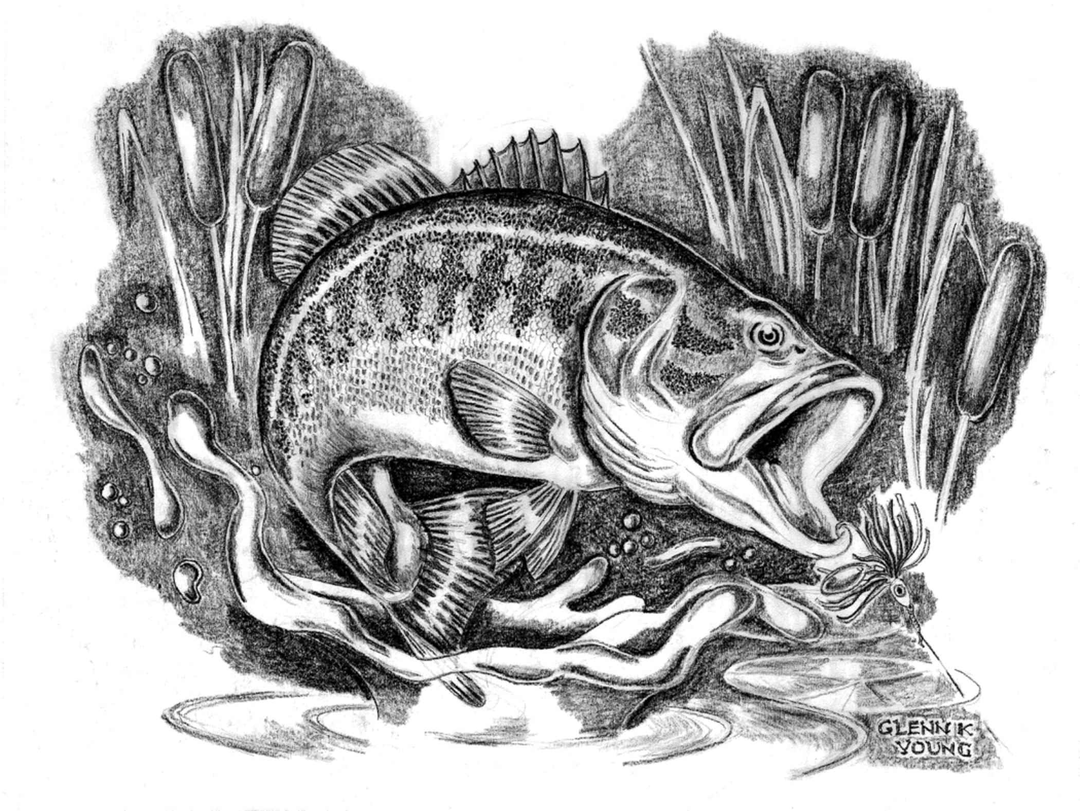 how to draw a bass fish