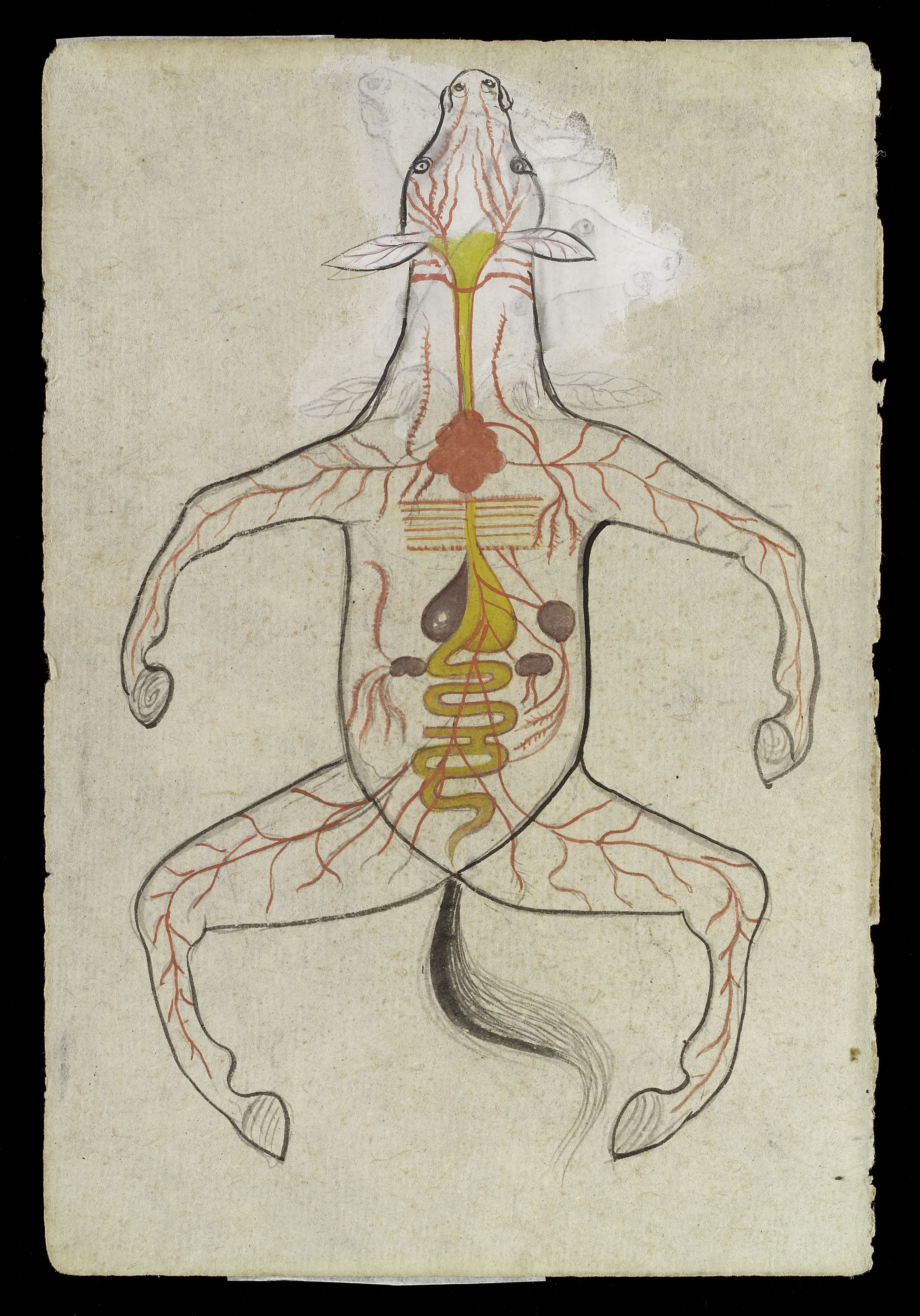 File:Intestinal system of a Horse Wellcome L0035205.jpg - Wikimedia ...