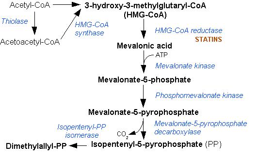 холестерин в биохимии крови норма