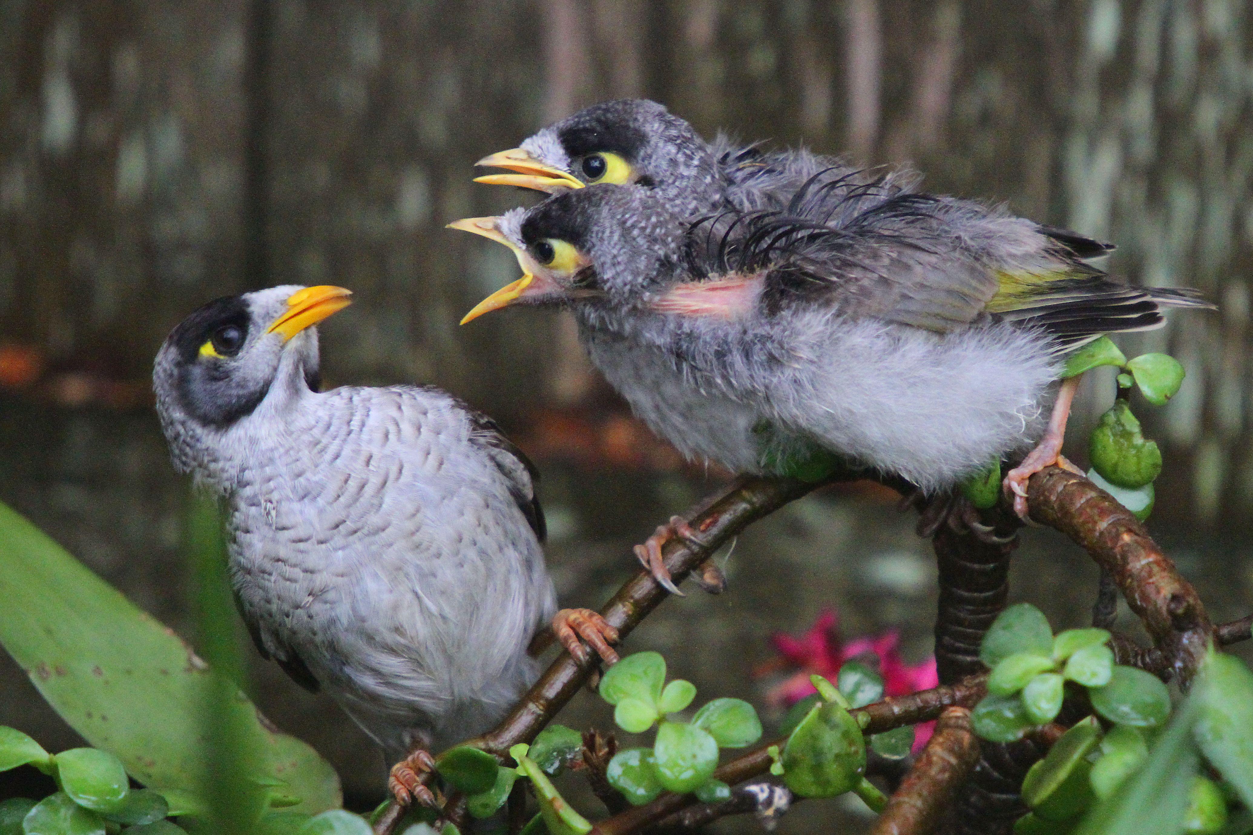 Birds on Tree Branch