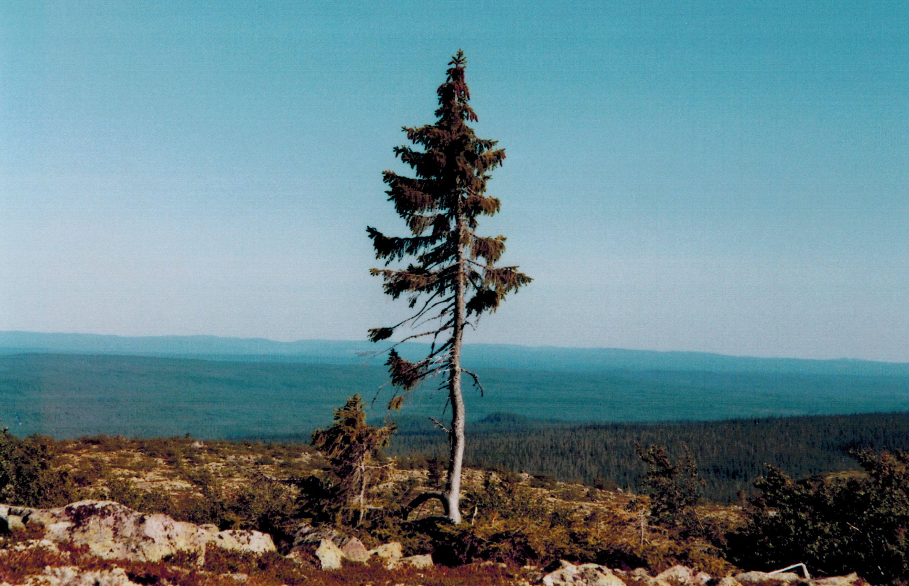 10 Of The Oldest Living Things In The World