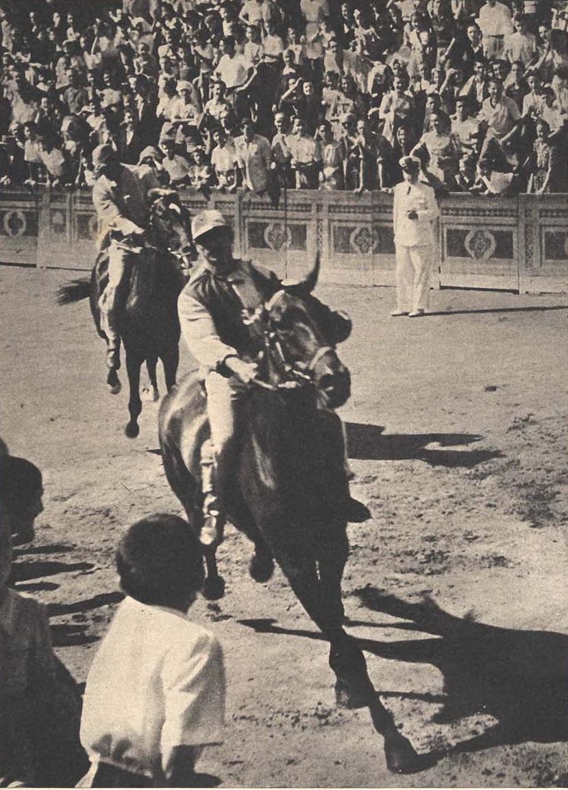 Palio di Siena 1953 a.jpg