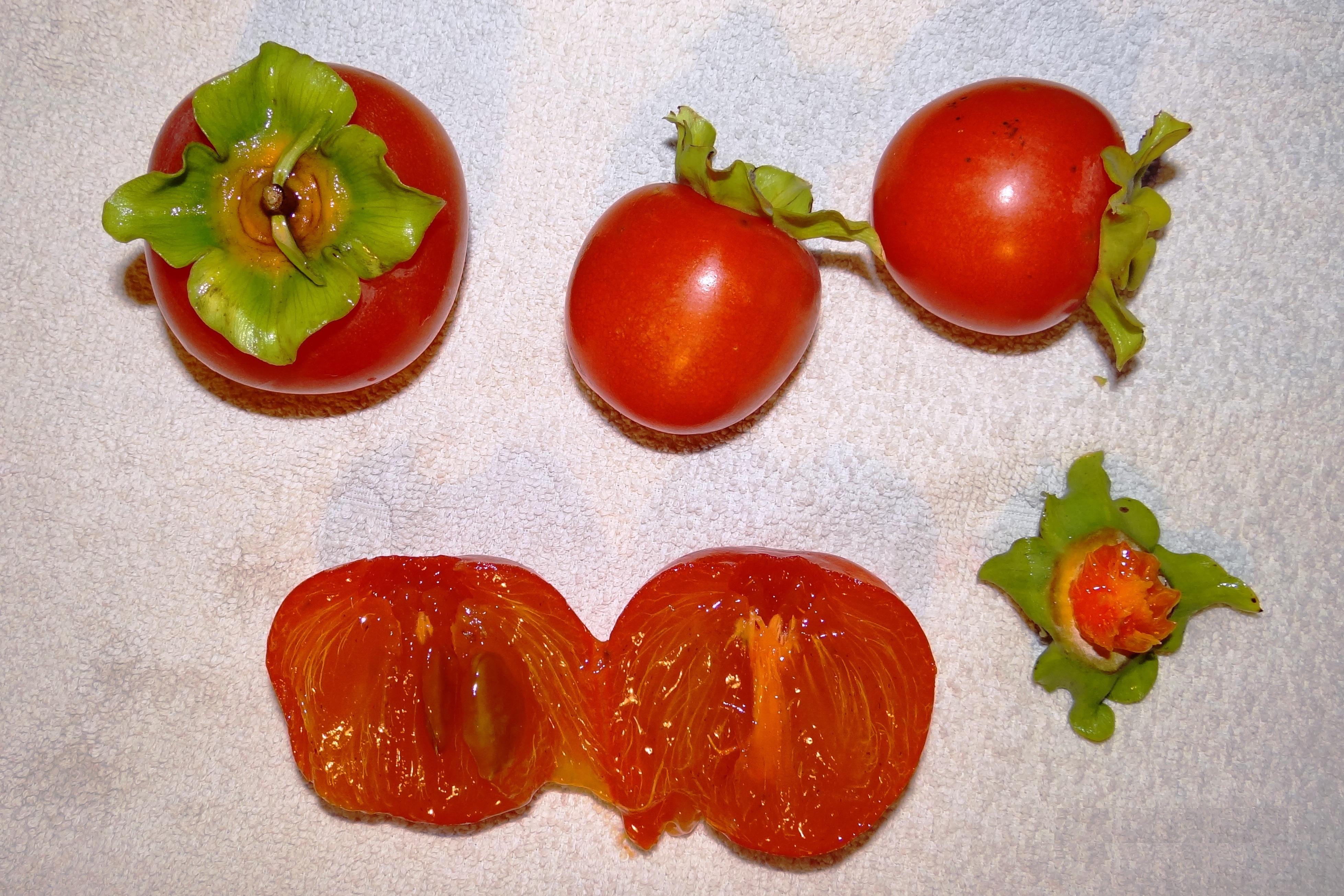 Diospyros kaki Seeds. Japanese Persimmon Sharon Fruit