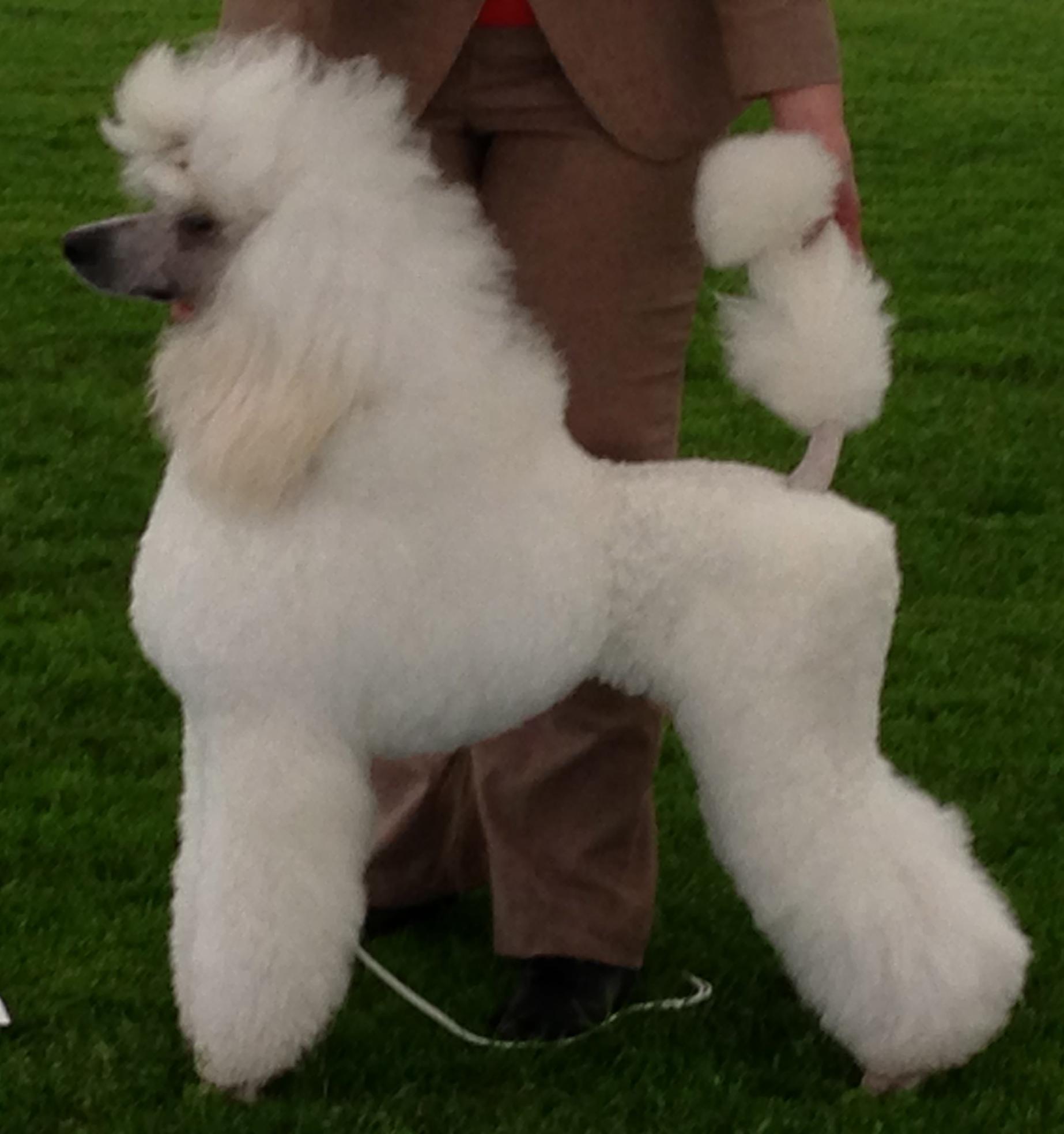 Big Dog Natural Recall