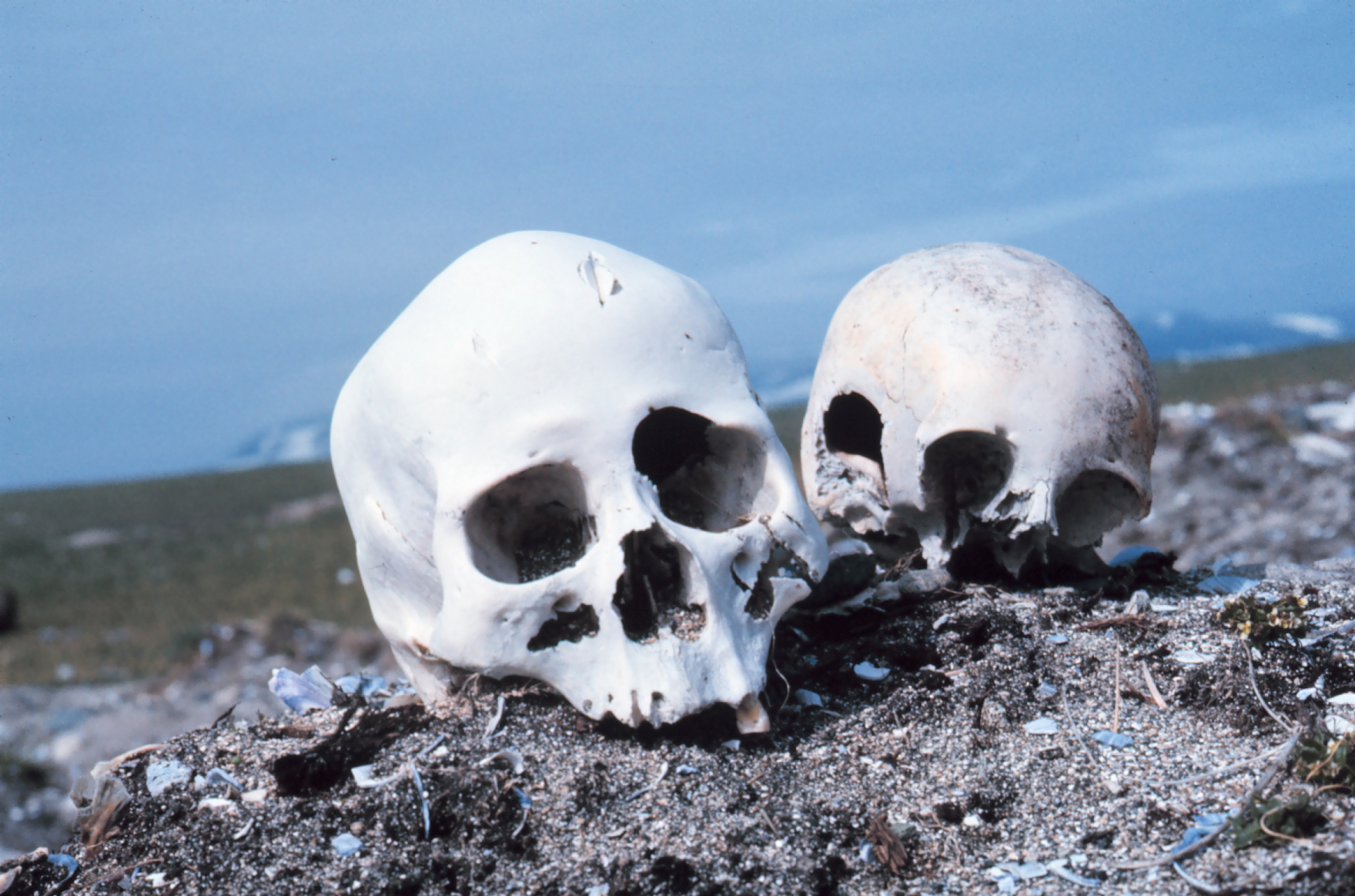 Punuk, AL, Skulls.