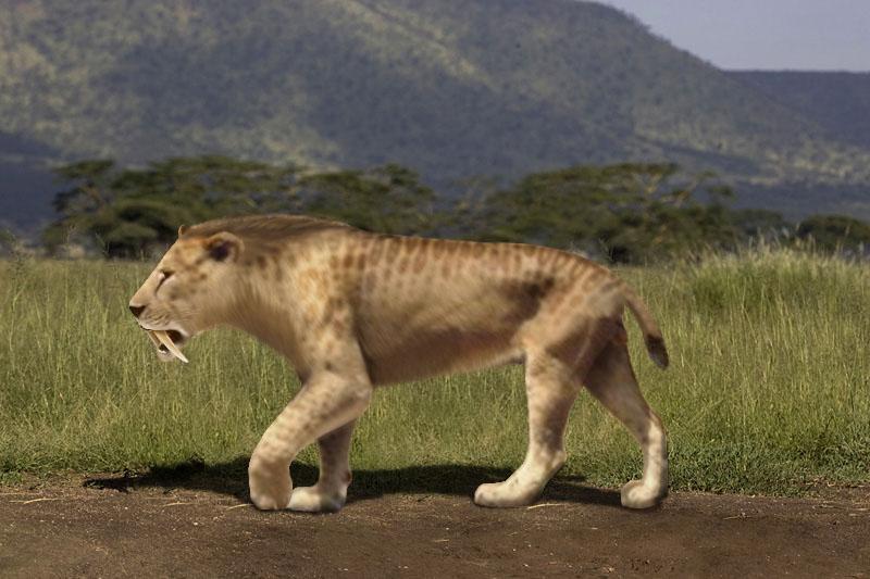 Kim byli przodkowie kota?