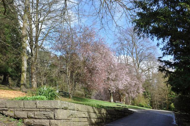Spring blossom at Cyfarthfa Castle - geograph.org.uk - 1249824