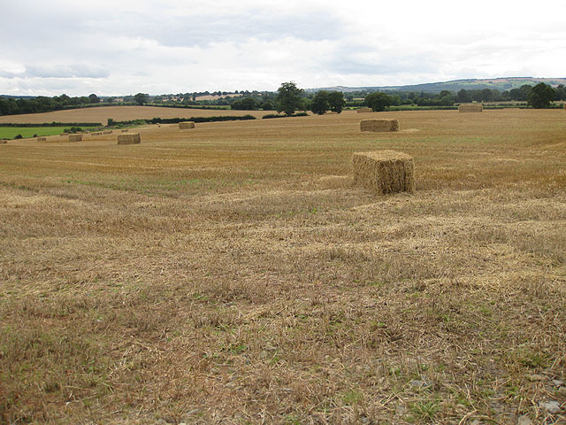 View south to Marcle Ridge - geograph.org.uk - 1452319