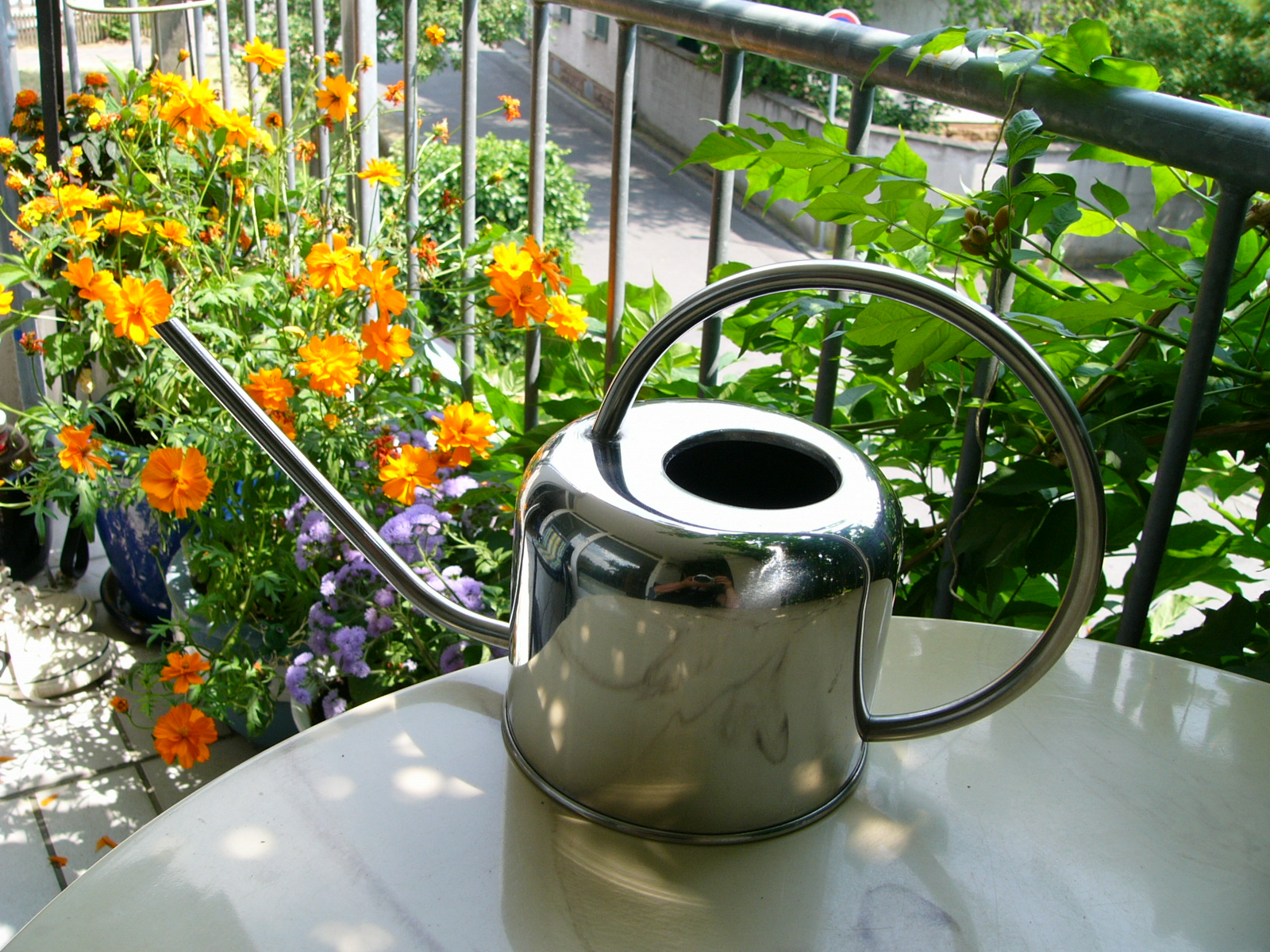 Ogród Łobzów Blog_zdrowe rośliny na balkonie miejski ogrodnik Kraków  Autor: Corinna Frączek