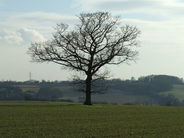 Winter Tree - geograph.org.uk - 1160055