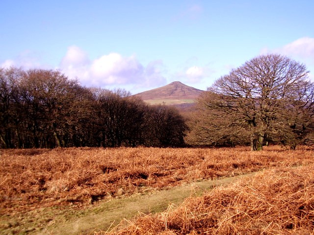 Woodland edge and Sugar Loaf Peak - geograph.org.uk - 1125654