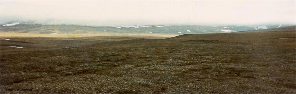 Wrangel Island tundra.jpg