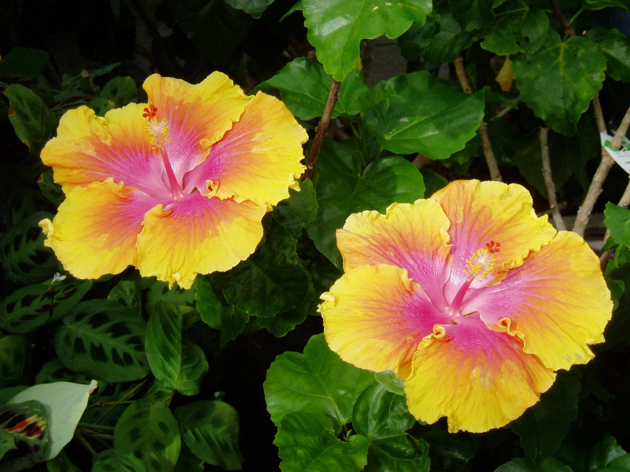 Fileyellow Flowerg Wikimedia Commons