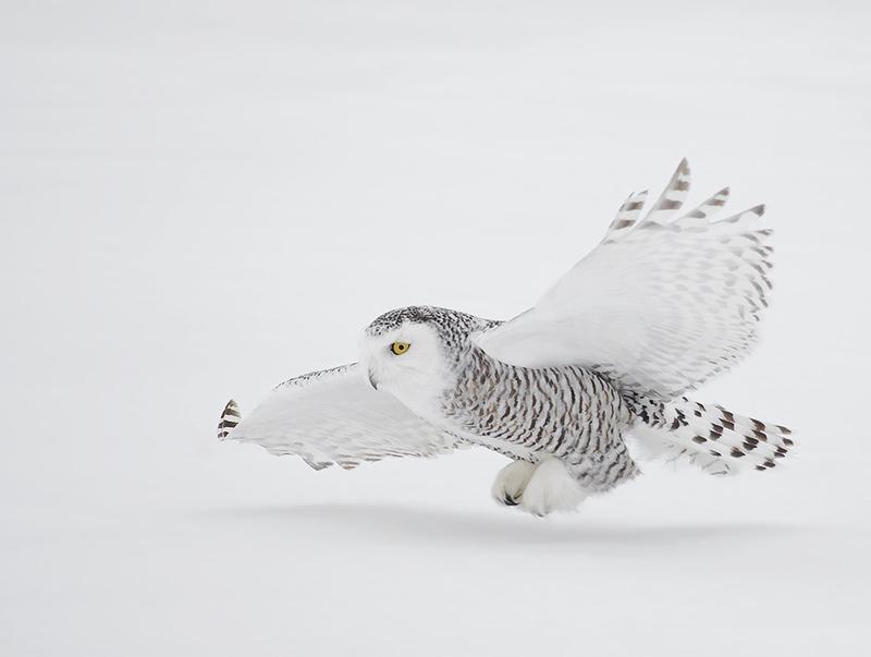 http://www.naturesphotoadventures.com/