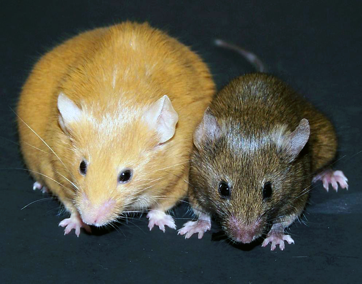epigenetic differences in mice