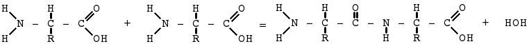 蛋白质生物合成