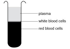 Anatomy and physiology of animals Packed cell volume of blood.jpg