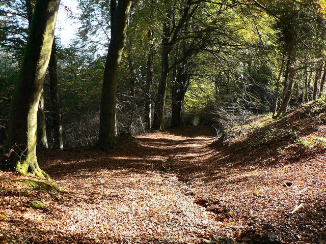Autumnal forest path at Llantrisant - geograph.org.uk - 1009719