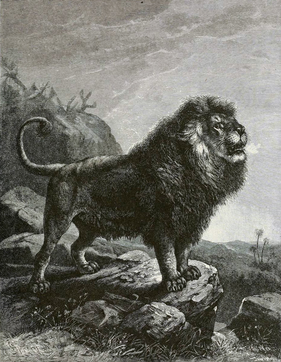 https://upload.wikimedia.org/wikipedia/commons/4/4d/BarbaryLionB1898bw.jpg