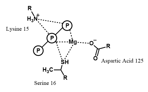 Figure 6: Amino acid residues of nitrogenase that interact with MgATP during catalysis.