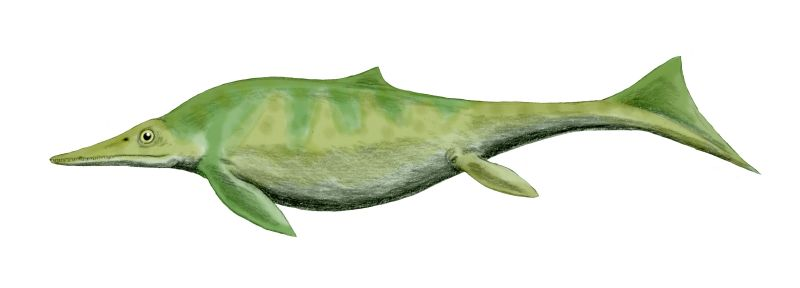 Californosaurus BW.jpg