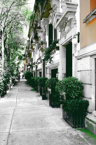 Calle en Colonia Roma best Mexico city hostels
