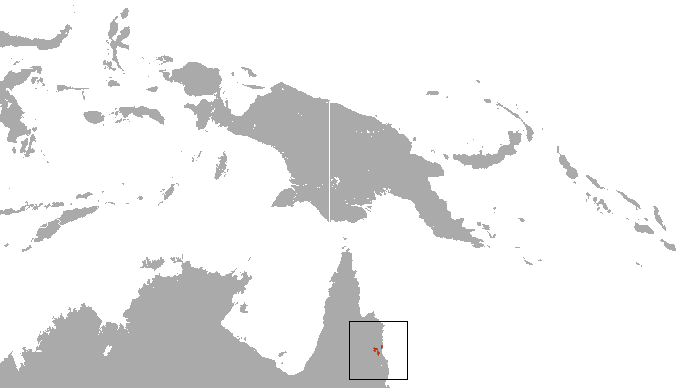 The average litter size of a Cinereus ringtail possum is 2