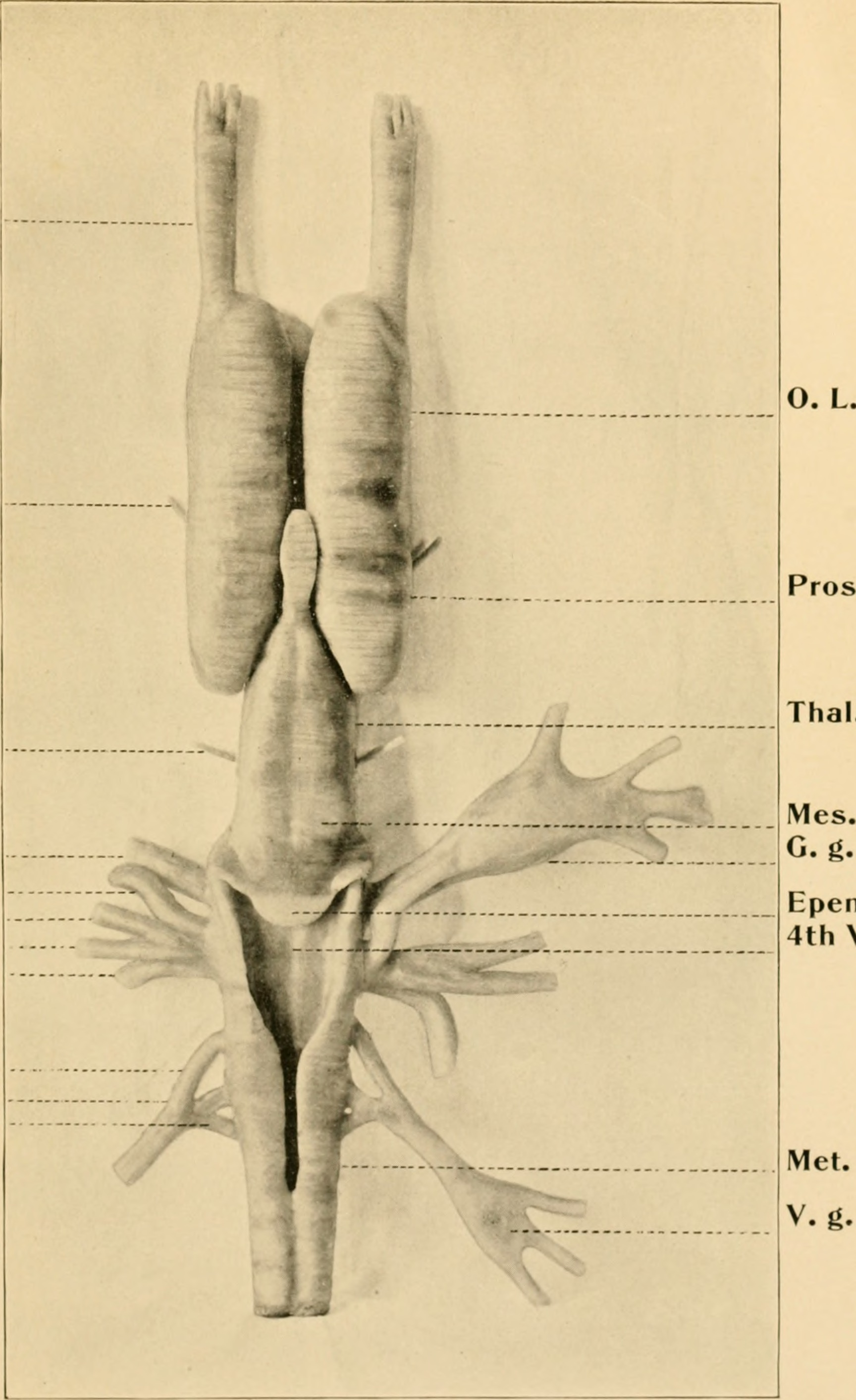 Filecontributions From The Anatomical Laboratory Of The University
