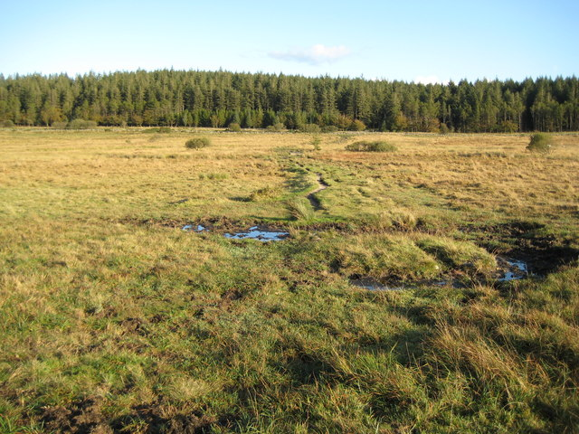 Dartmoor, The Lych Way - geograph.org.uk - 1028807
