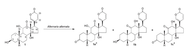 The different metabolites obtained from the biotransformation of arenobufagin by Alternaria alternata
