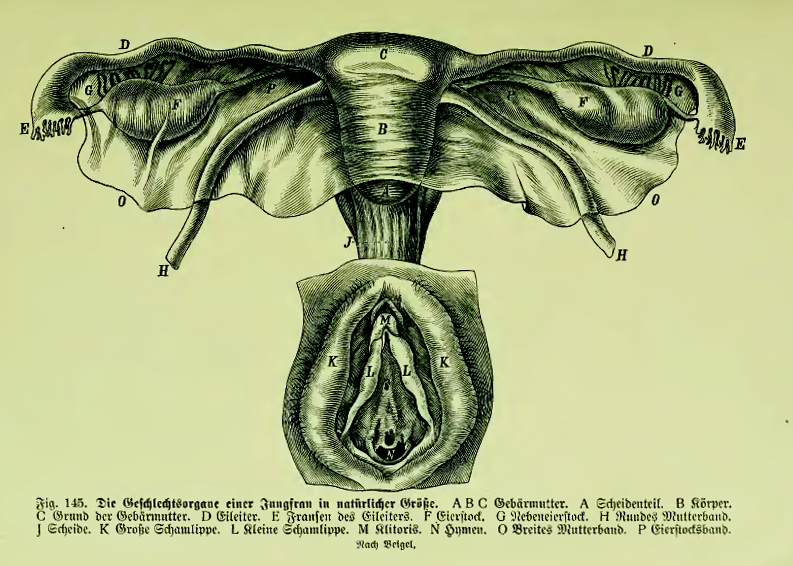 mann f grafis große klitoris