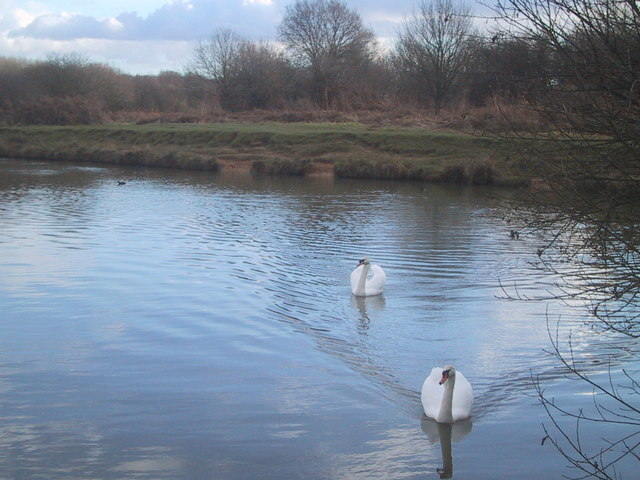 Ditchling Common lake - geograph.org.uk - 1081480